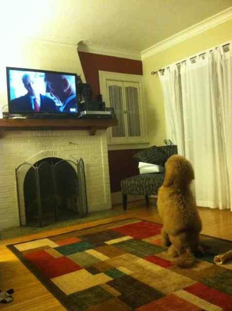 Panda watching TV-imageuploadedbypg-free1358546569.958780.jpg