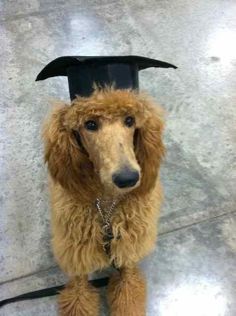 Conan graduated puppy class last night! (Pics)-imageuploadedbypg-free1358889228.849167.jpg