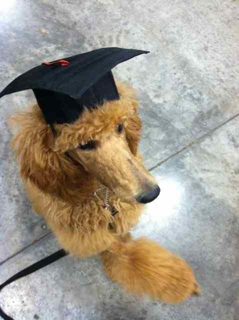 Conan graduated puppy class last night! (Pics)-imageuploadedbypg-free1358889251.835553.jpg