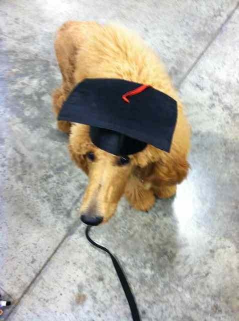 Conan graduated puppy class last night! (Pics)-imageuploadedbypg-free1358889264.880671.jpg