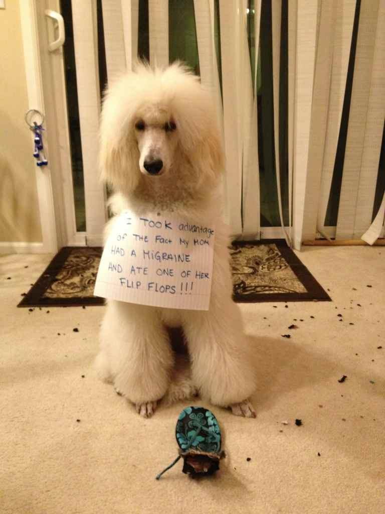 Dog Shaming-imageuploadedbypg-free1359688563.747054.jpg