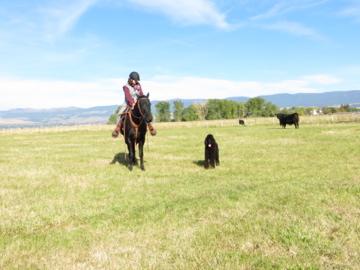 Black on Black on Black: Checking the Cows-img_0235.jpg