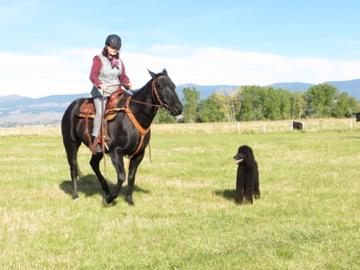 Black on Black on Black: Checking the Cows-img_0236.jpg