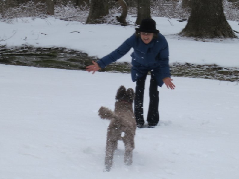 Teddy having fun in snow with new family-img_0689-800x600-.jpg