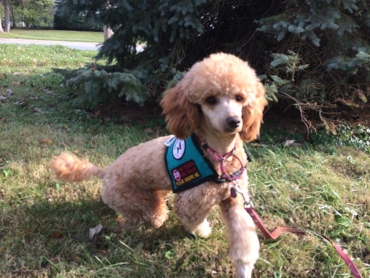 Diabetes Alert Dog Training Update-img_0997.jpg