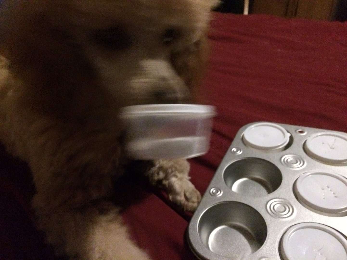 Diabetes Alert Dog Training Update-img_1006.jpg