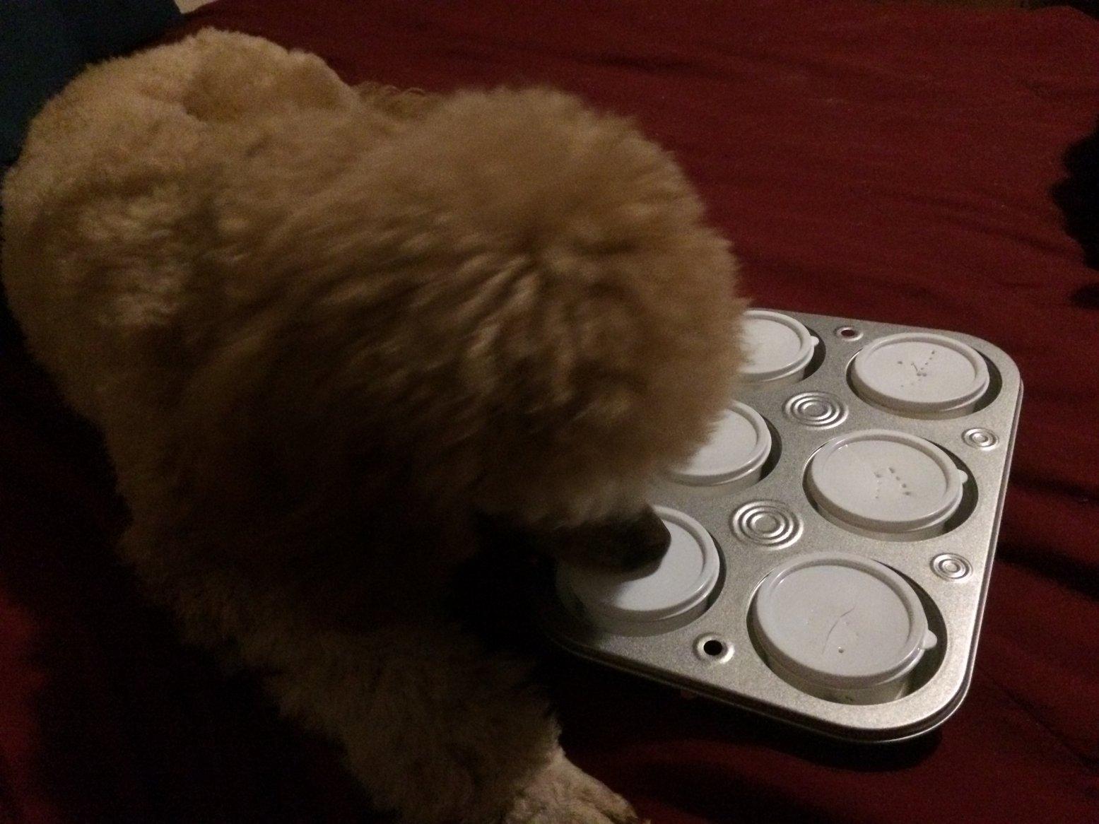Diabetes Alert Dog Training Update-img_1007.jpg