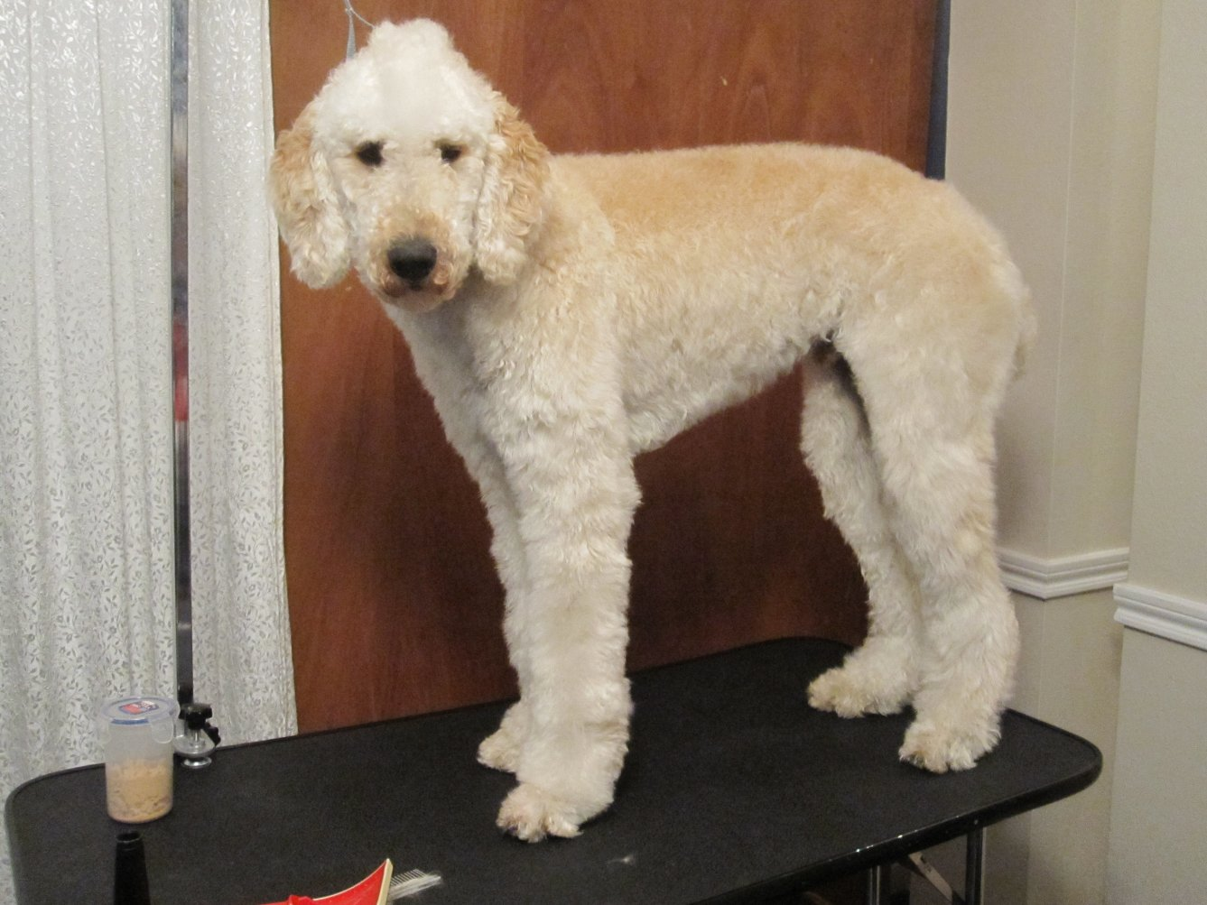 Leroy may NOT be a poodle!!-img_1782.jpg