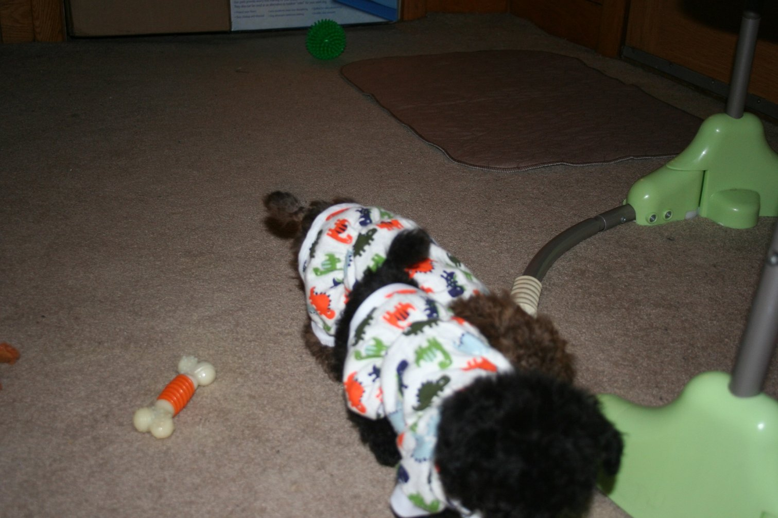 the boys and their dino pajamas-img_3286.jpg