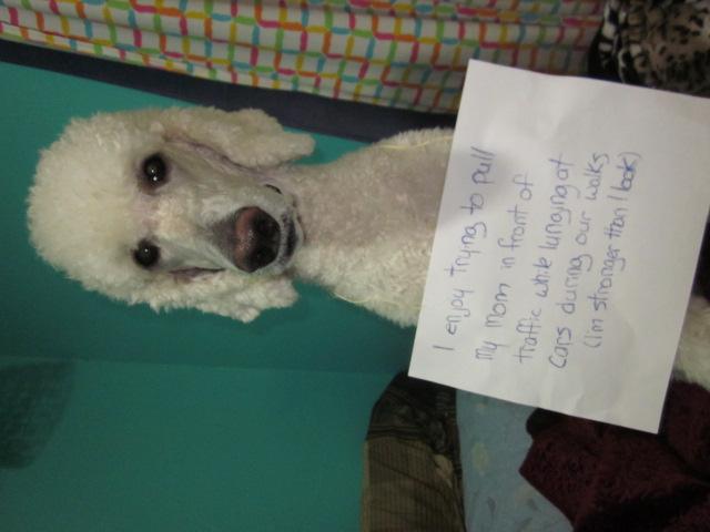 Dog Shaming-img_3450.jpg