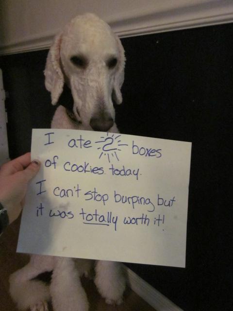 Dog Shaming-img_3622.jpg