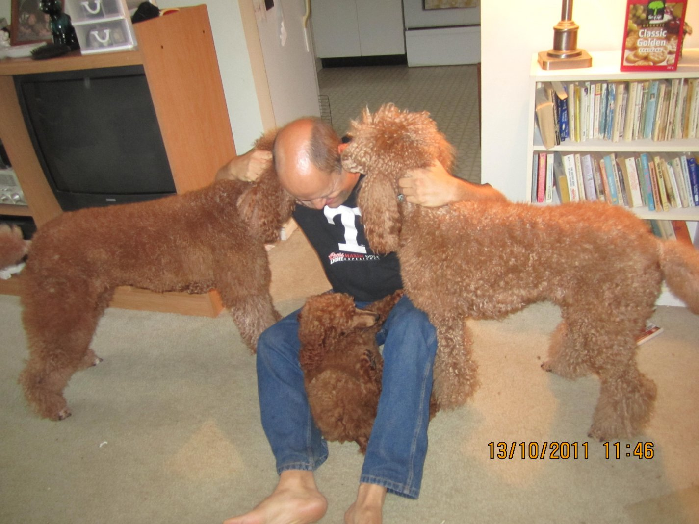 The Red Poodle Thread-img_4136.jpg