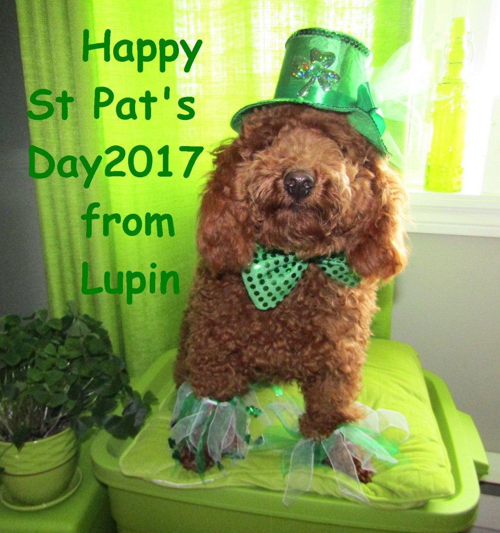 The First 52 Weeks of Lupin-irishlupin2017.jpg