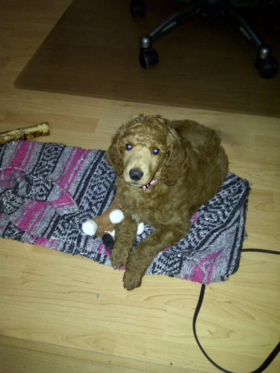 Mister Babykins Jasper-jasper-puppy.jpg