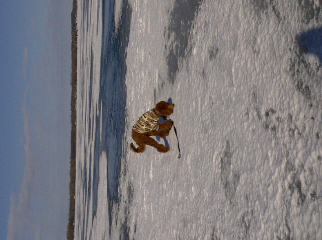 Mister Babykins Jasper-jasper-icefishing.jpg