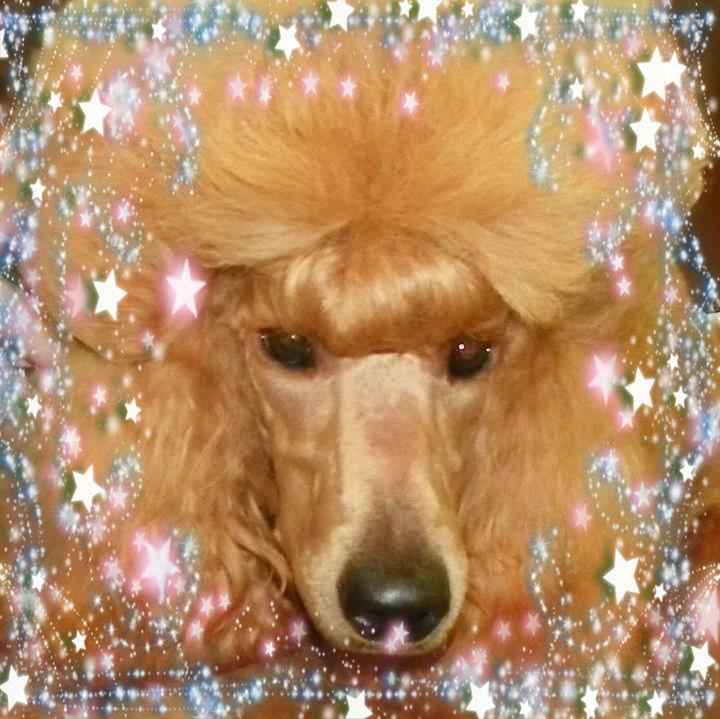 The Red Poodle Thread-journey.jpg