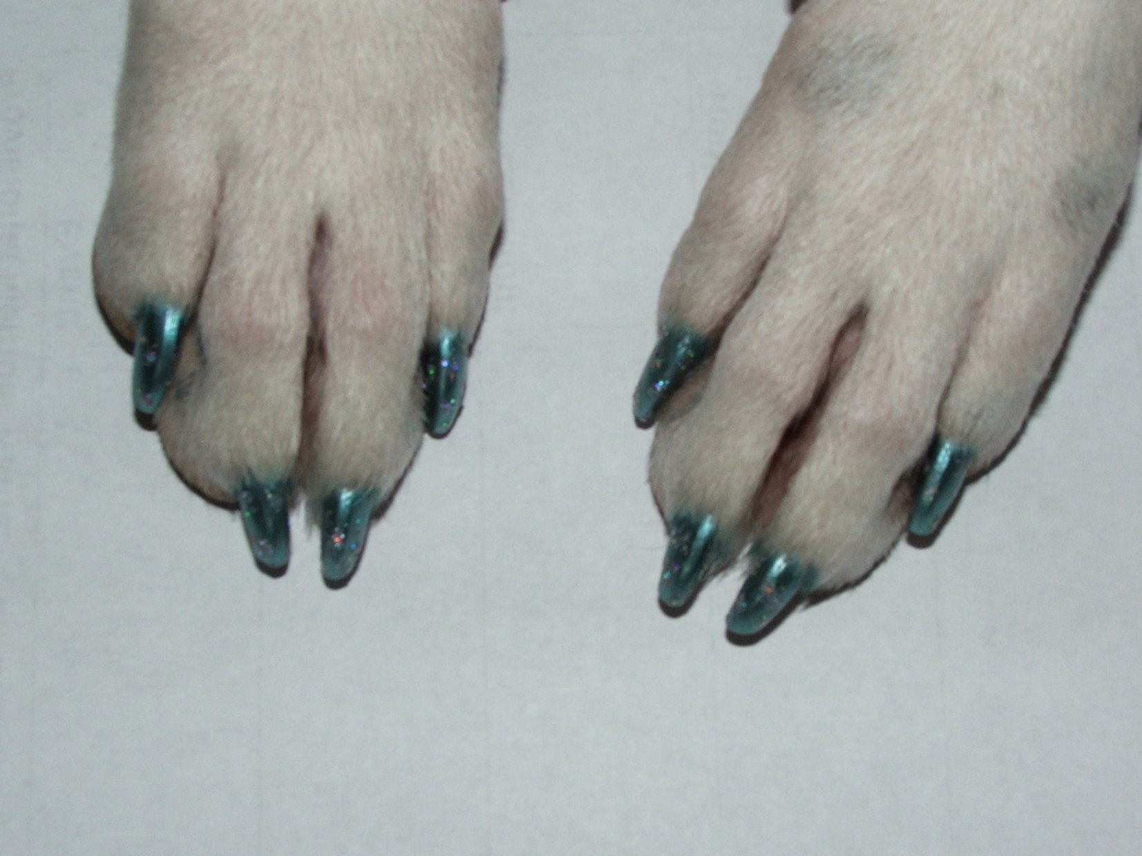 Question about nail polish! - Page 3 - Poodle Forum - Standard ...