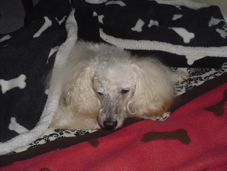 The White Poodle Thread-lord-byron-1-26-09.jpg