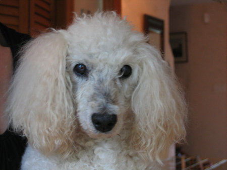 The White Poodle Thread-lord-byron-2008.jpg