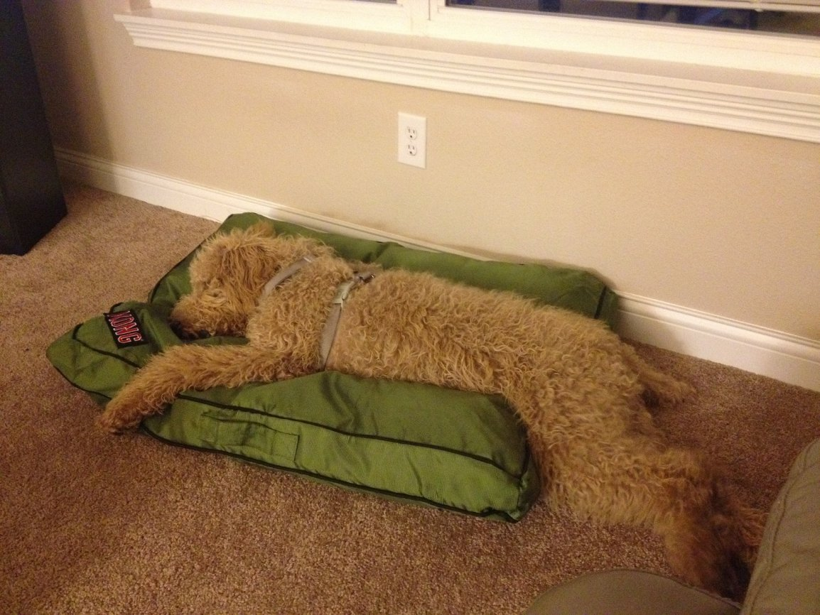 What are the MOST IMPORTANT commands to train my puppy?-lou-her-bed-finally-hope-lasts.jpg