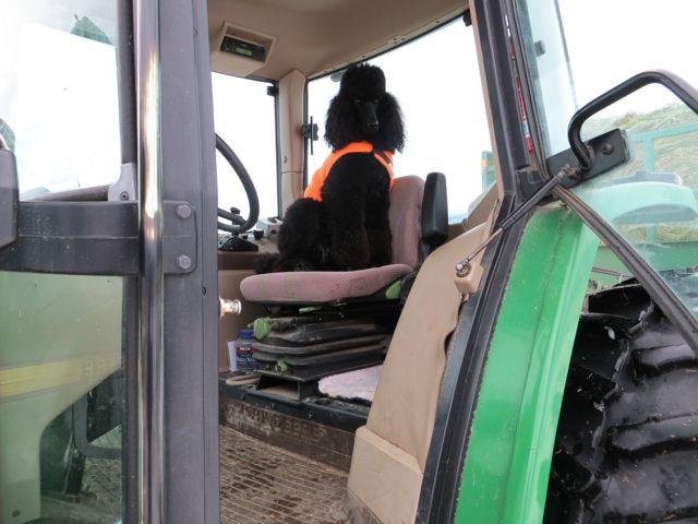 Louie the Tractor Driver-louie-tractor-driver-1-1-2013.jpg