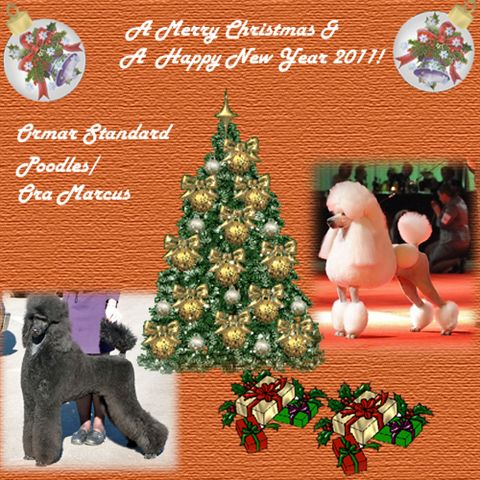 Merry X-Mass and Happy Holidays to all - Poodle Forum - Standard ...