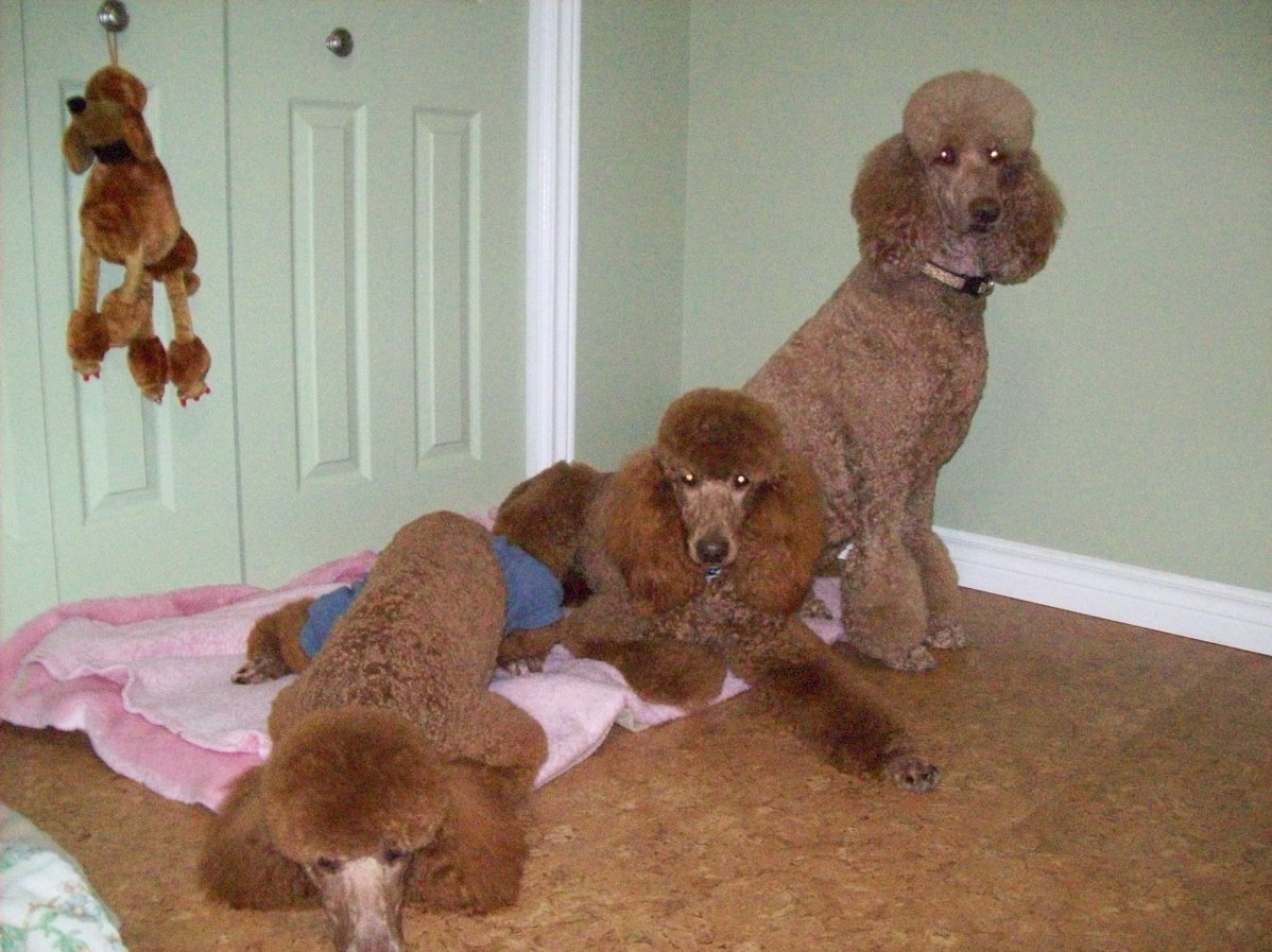 The Red Poodle Thread-mommy-her-girls.jpg