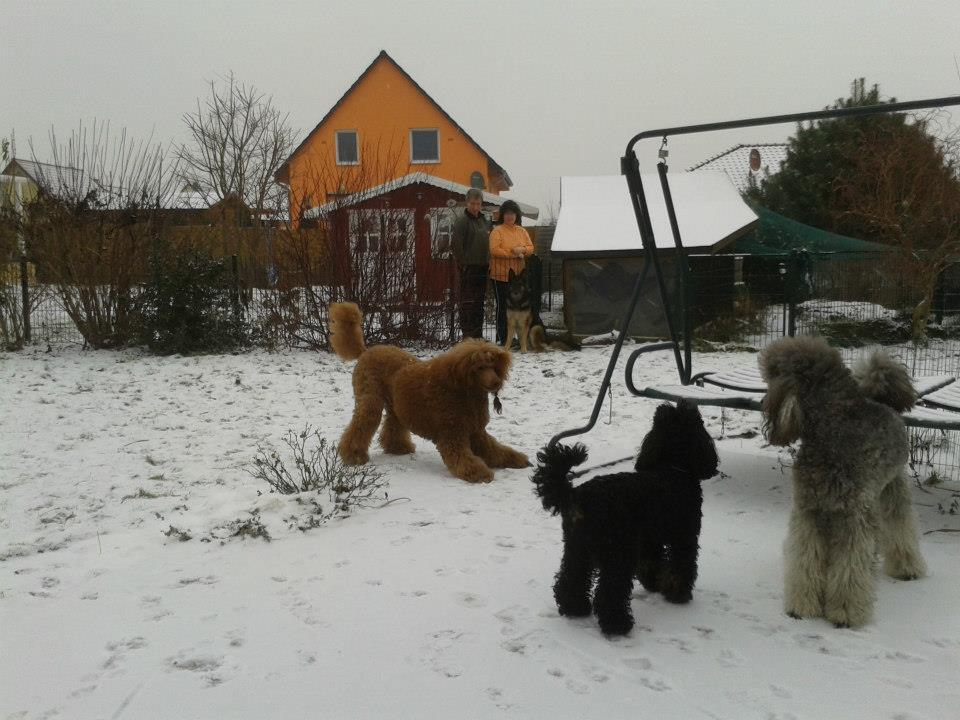 Winter babies-murphy-1.jpg
