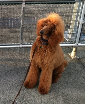 The Red Poodle Thread-nell-2-july-2011-sm.jpg