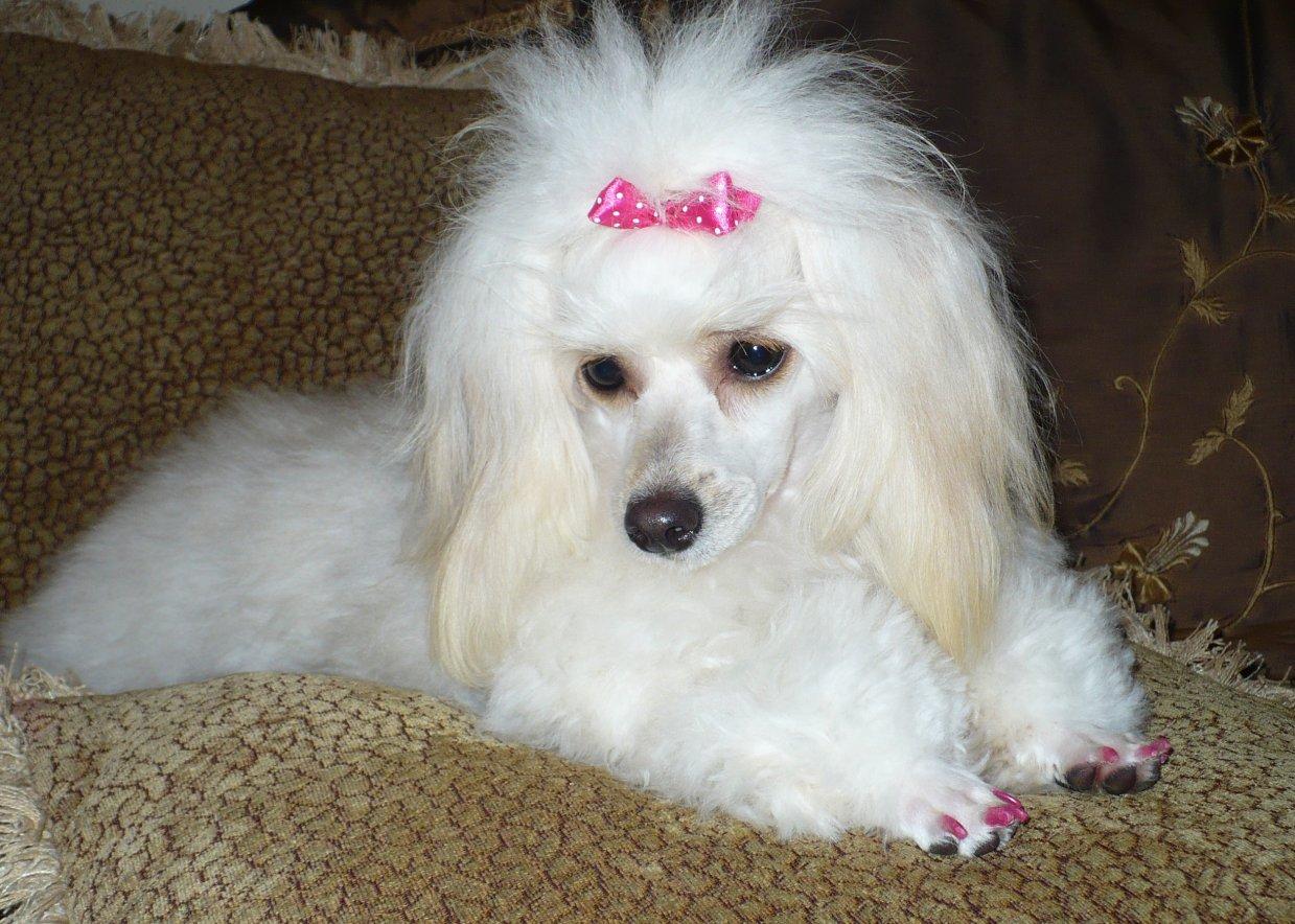 Pink pink & more pink!!!-p1030676.jpg