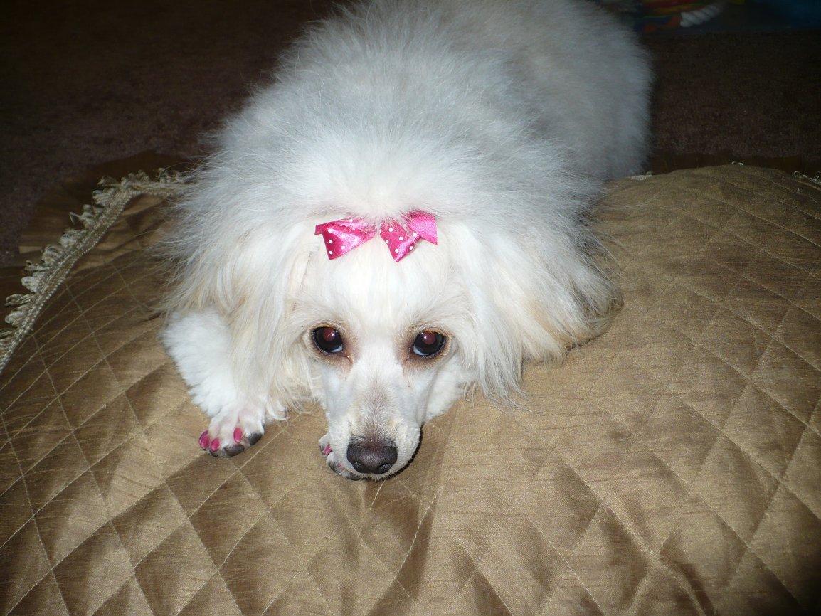 Pink pink & more pink!!!-p1030699.jpg