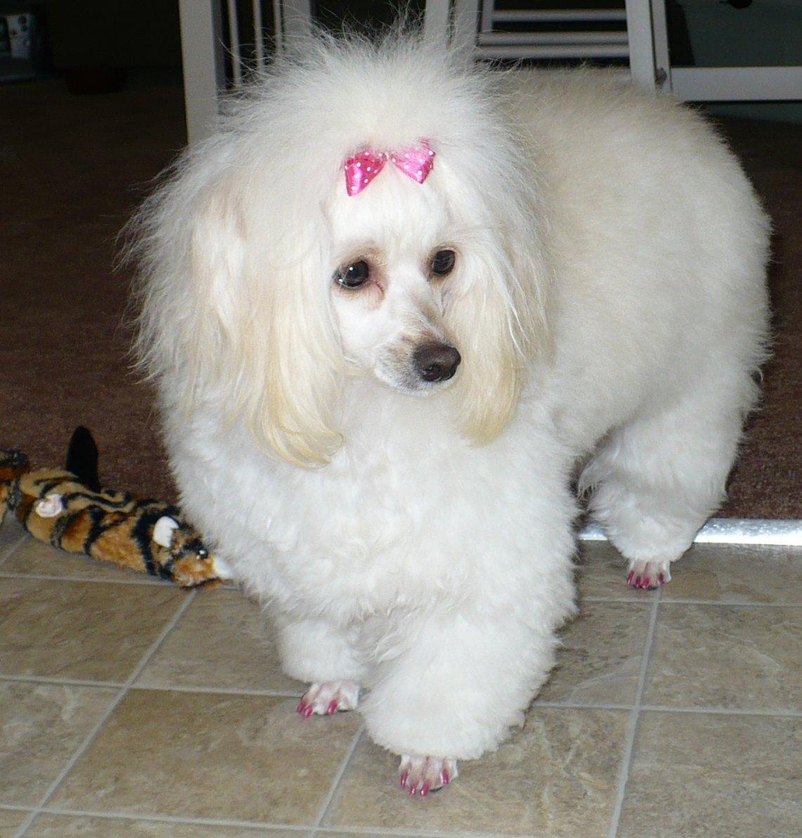 Pink pink & more pink!!!-p1030715.jpg