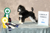 New UKC Champion-p1453732114-11.jpg