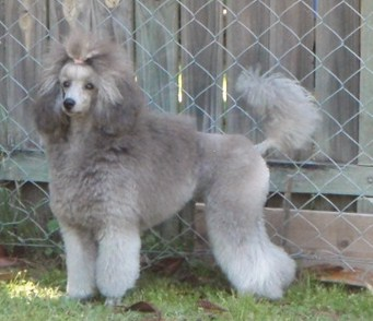 The Silver Poodle Thread-pb140011.jpg