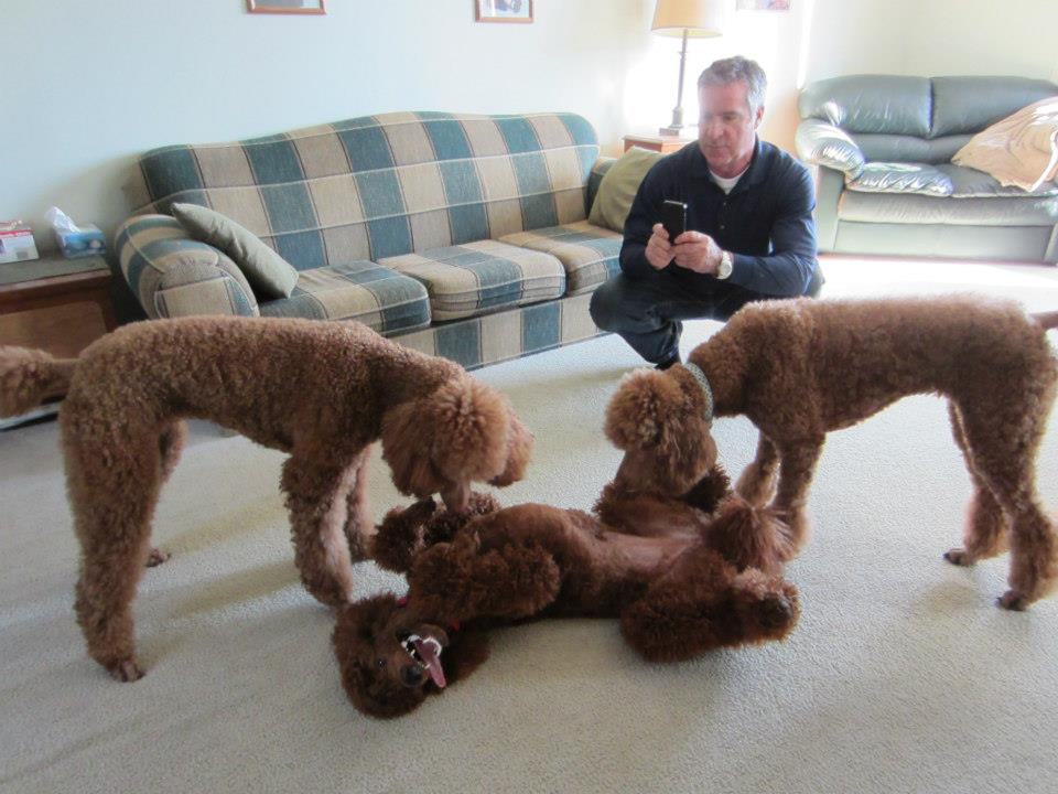 The Red Poodle Thread-penny-10.jpg