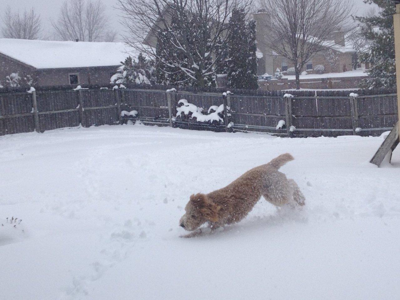 Snow Fun!... then... snow balls all over her hair! :-)-photo-3.jpg