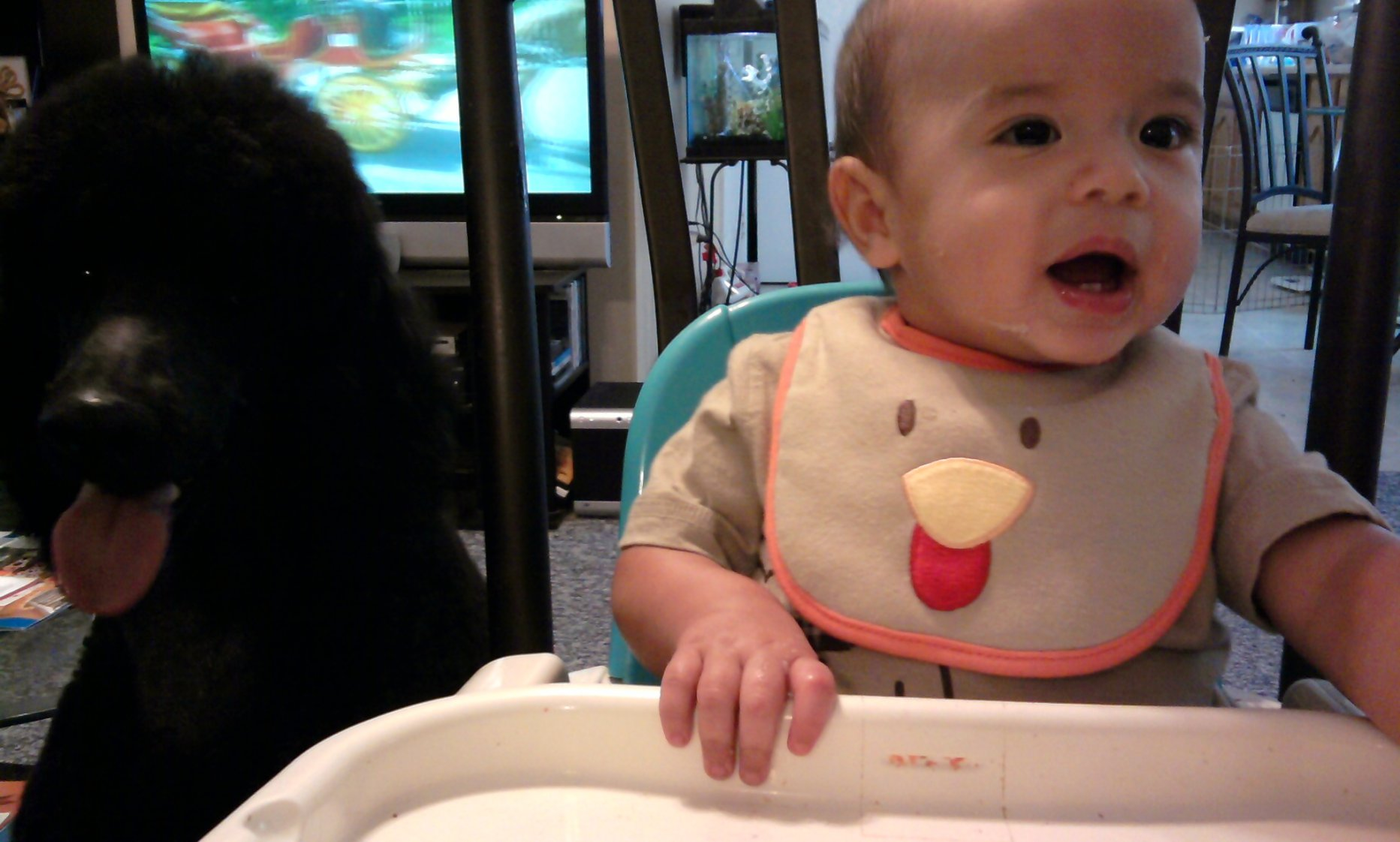 Baby's First Thanksgiving (pics)-photo0269.jpg