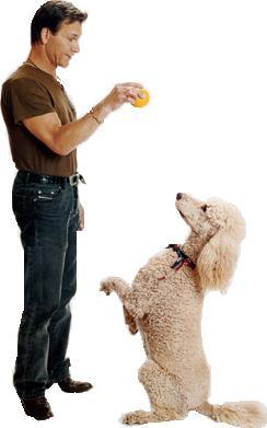 Poodles and their Famous People-phpthumb_generated_thumbnailjpg.jpg
