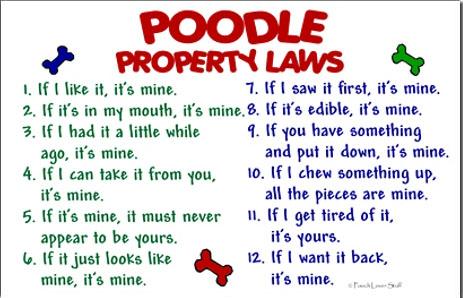 Poodle Property Laws-poodle-property-laws.jpg