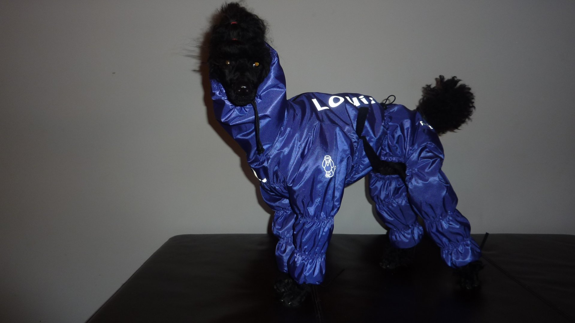 Dog snowsuit with boots attached group buy from poodleit gaiters