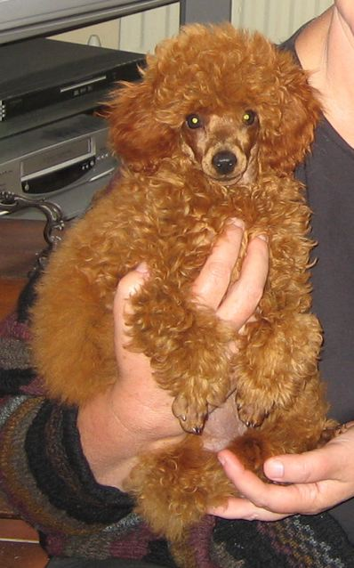 Post your puppy pictures! :D-poppy-baby-pic.jpg