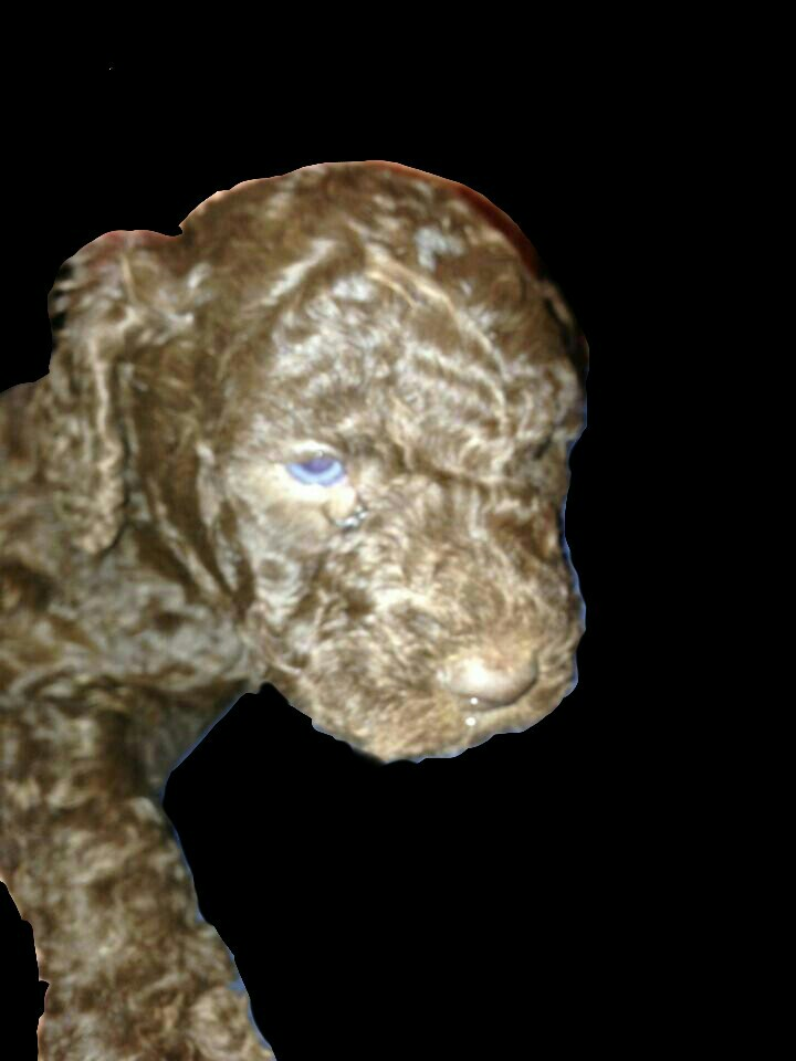 5 week old baby-pup.m-picsay.jpg