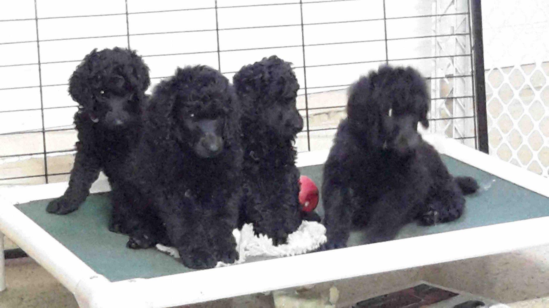 52 weeks of Javelin!-pups-cot.jpg