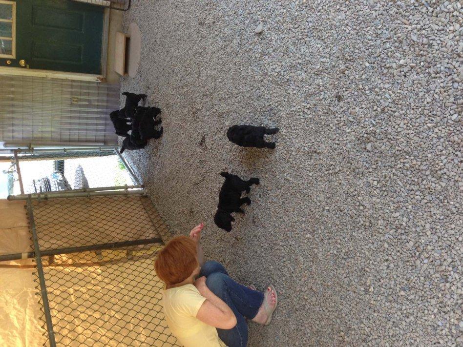 52 weeks of Javelin!-pups-outside-1.jpg