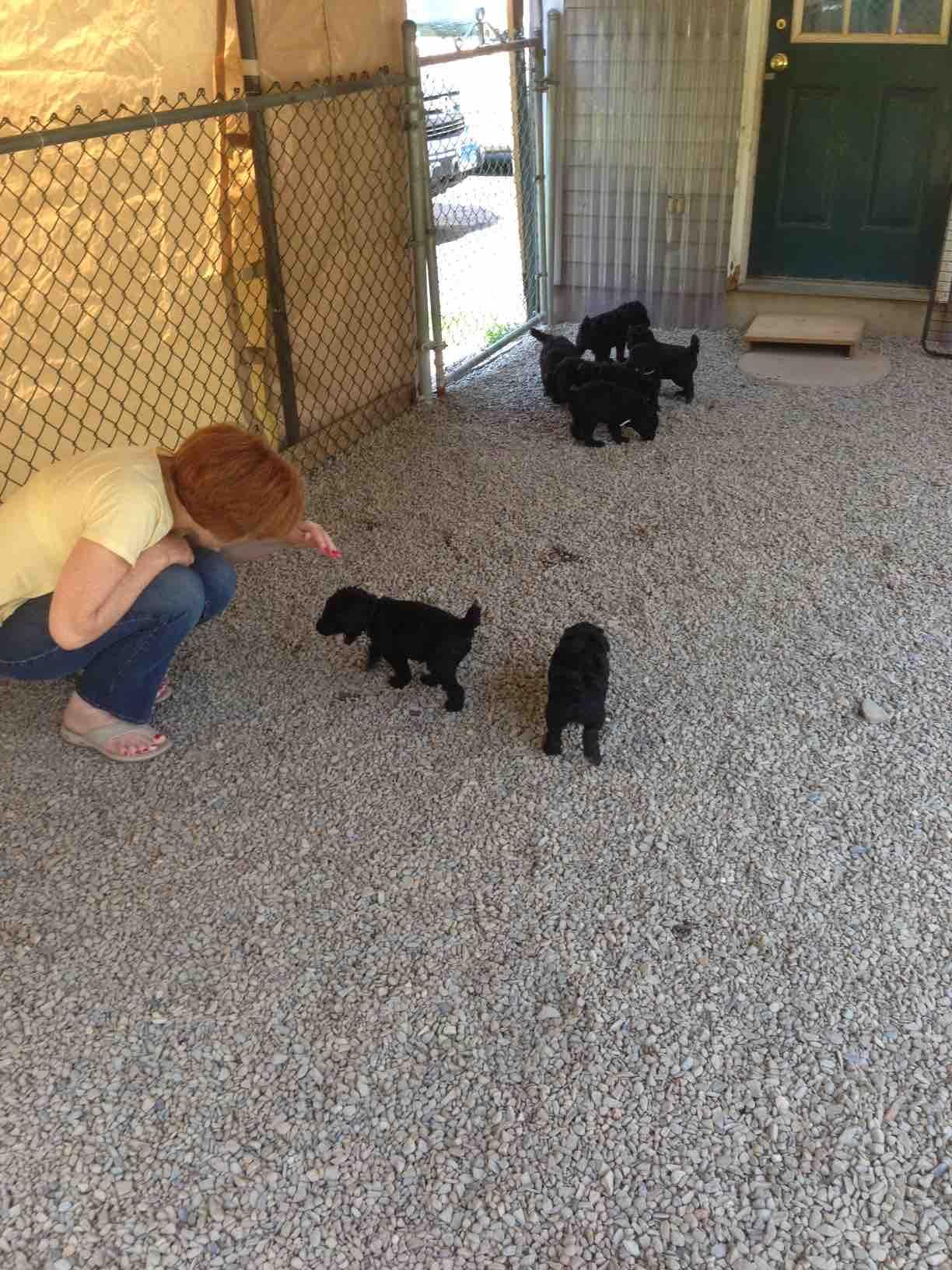 52 weeks of Javelin!-pups-outside.jpg