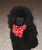 Hi - new to the forum-remy_15wks_2web.jpg