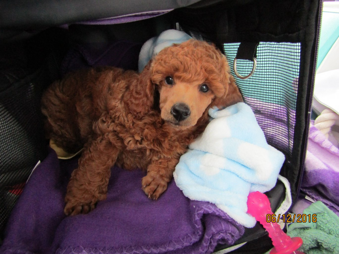 The First 52 Weeks of Lupin-ride-home-5hrs-8-wks-june-12-16.jpg
