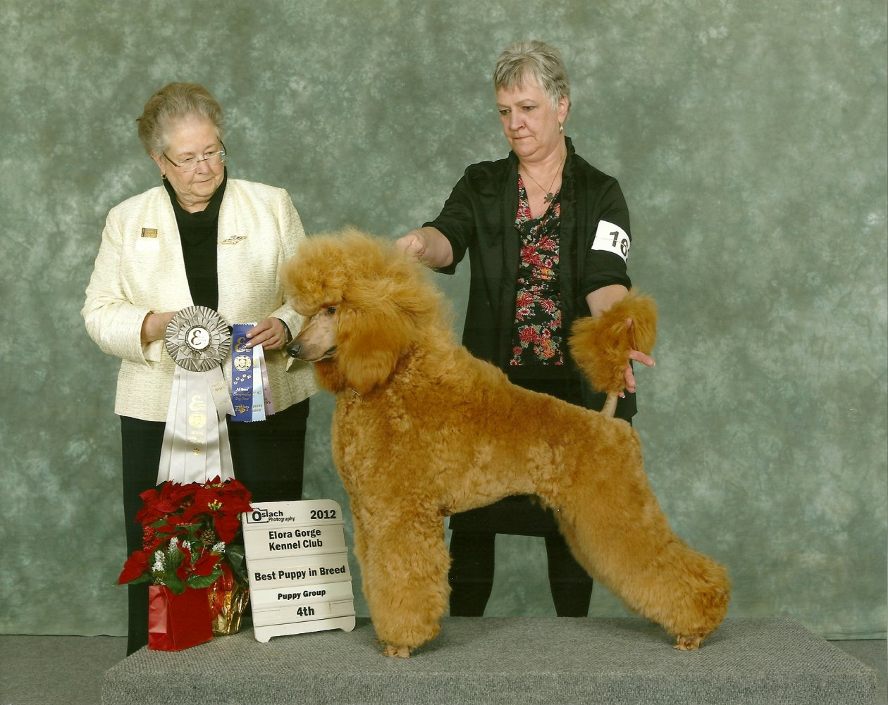 The Red Poodle Thread-scan0001.jpg