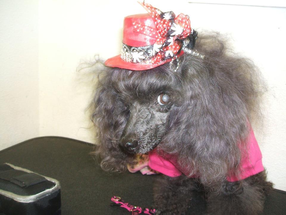 My Poodles-skoba.jpg