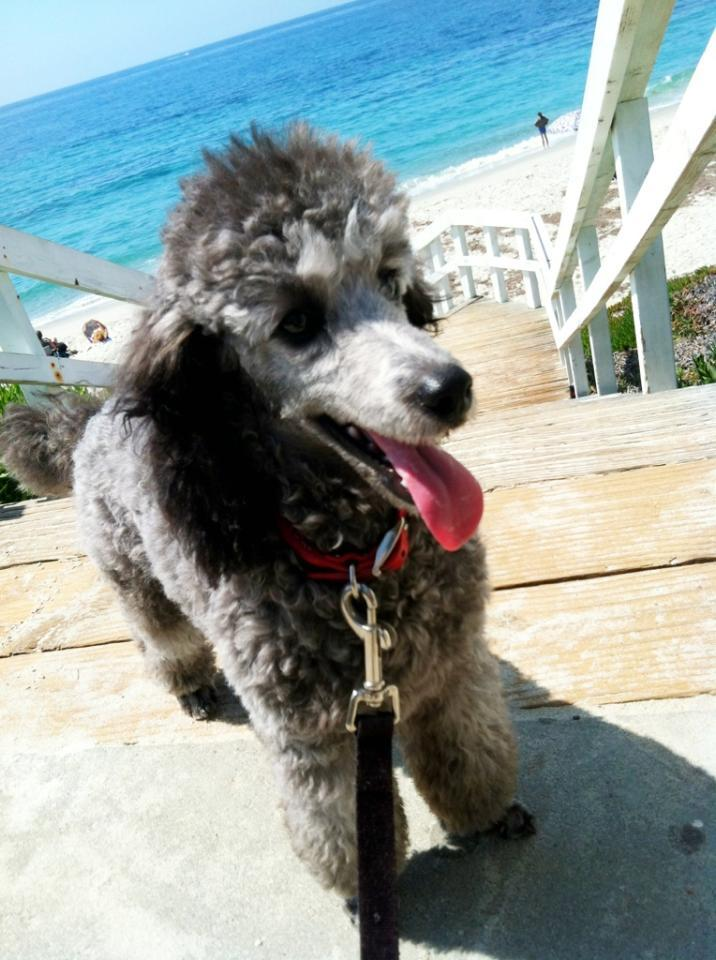 Hello from La Jolla, CA-sophie-beach.jpg